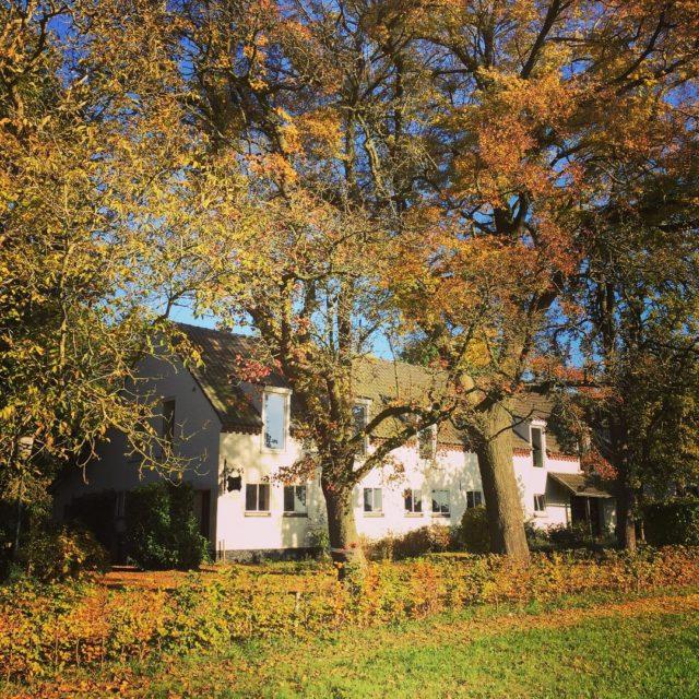 Gouden herfstkoorts op hoffenterhof goud herfst autumn gold
