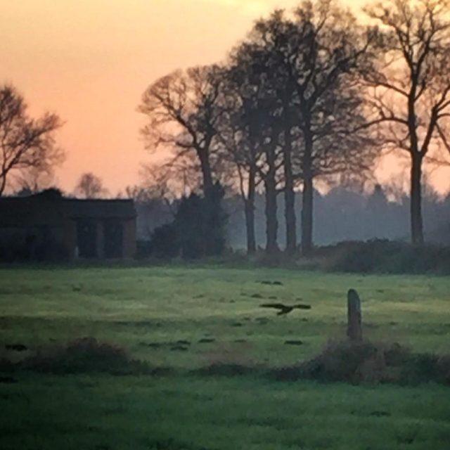 De buizerd laat zich vrijwel elke dag zien rondom hoffenterhofhellip