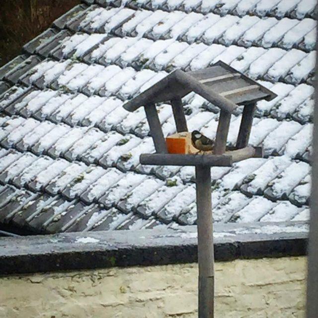 Winterse tafelen op HoffenterHof vogelhuisje koolmees winter vogel sneeuw vorsthellip